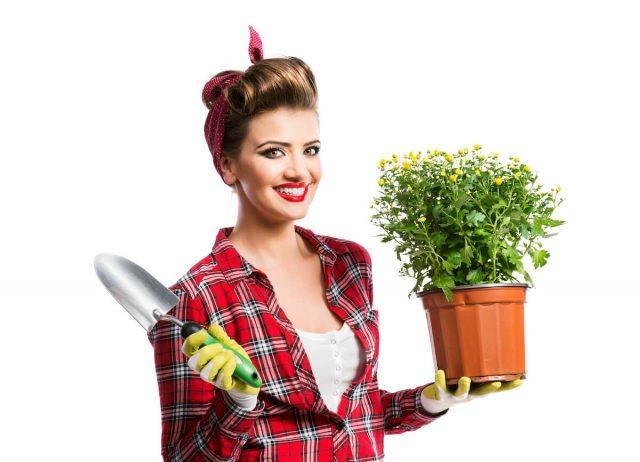 jak zatočit s plísní v květináči