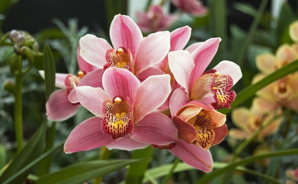 orchidej druhy